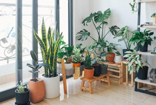金運あげる方法 風水 玄関 観葉植物 運気 変化